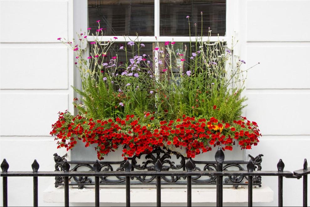 gradina-jardiniere