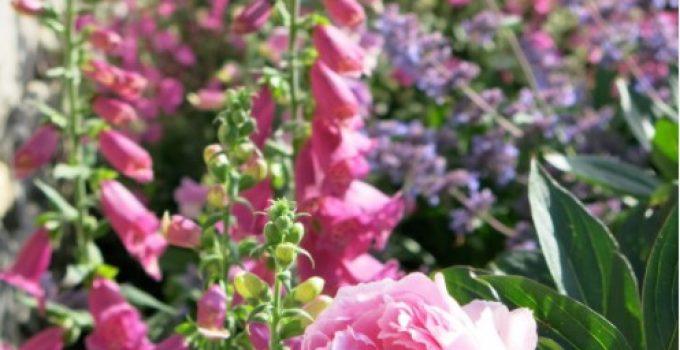gradina-flori